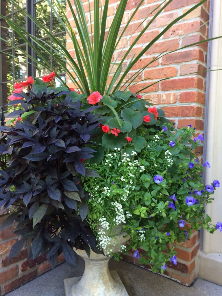 Potted Urn