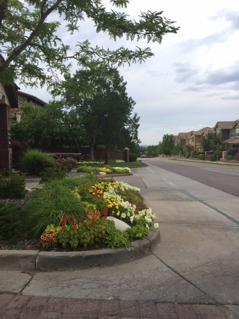 Landscaping Along a Residential Road