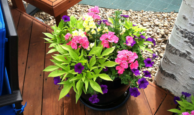 Potted Plants Accentuate Landscaping